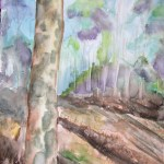 a water colour painting of an australian landscape with pretty mottled bark