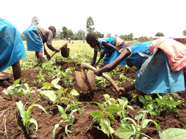 Children LearnbyDoing Organic Farming Project  AVSOORG