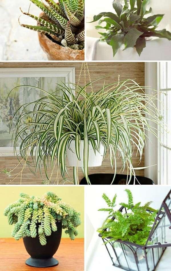 What indoor plants need little light  Interior Design