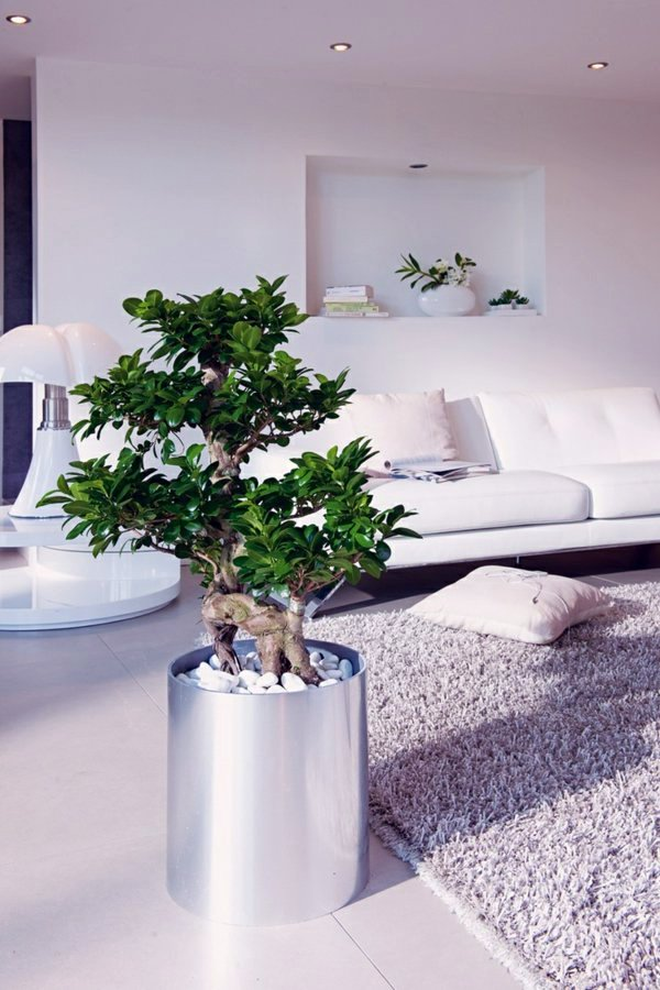 Feng Shui plants for harmony and positive energy in the living room  Interior Design Ideas