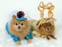 Cool Dog Clothing for Halloween   Interior Design Ideas ...