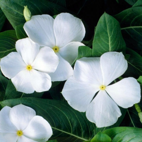 White Flowers Images And Names Wallpaper Images