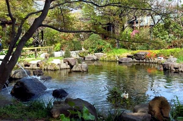 creating beautiful garden pond