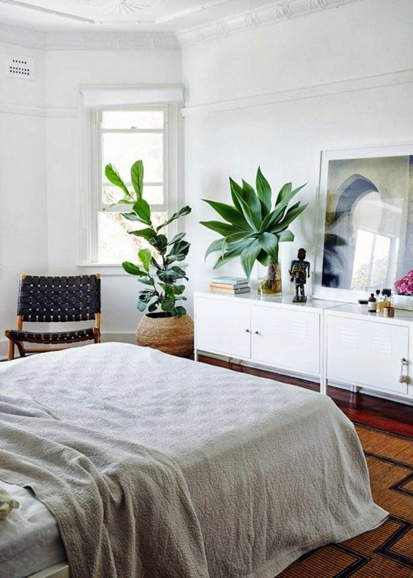 Plants in the bedroom  potted flowers which are particularly suitable for  Interior Design