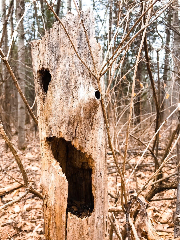 legno morto