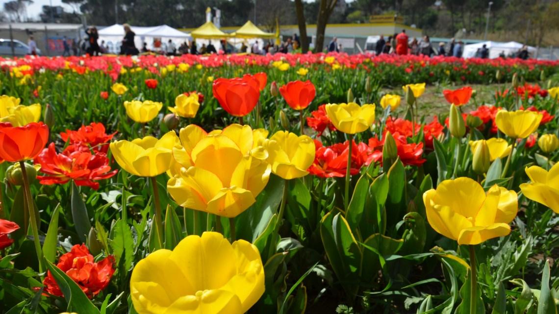 Una giornata tra i tulipani a Roma!