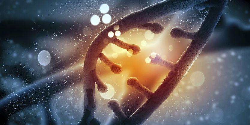 Ancestors DNA
