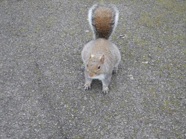 Wandsworth wildlife