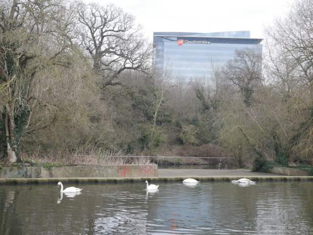Gsk and swans!