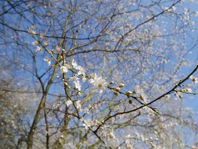 Spring! (boing!)