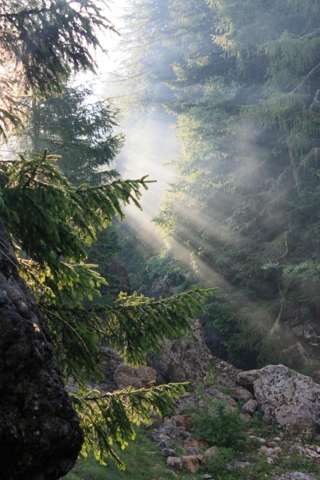 Sun streaming through the trees
