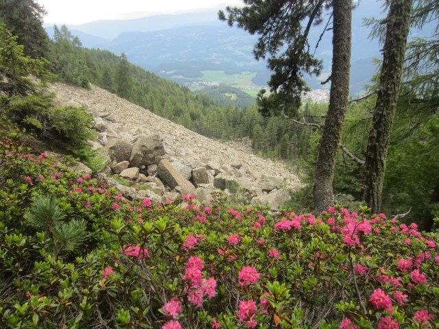 Pretty rhododendrons