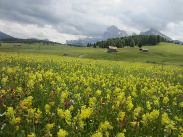 Pretty yellow fields