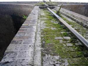 Mossy bridges