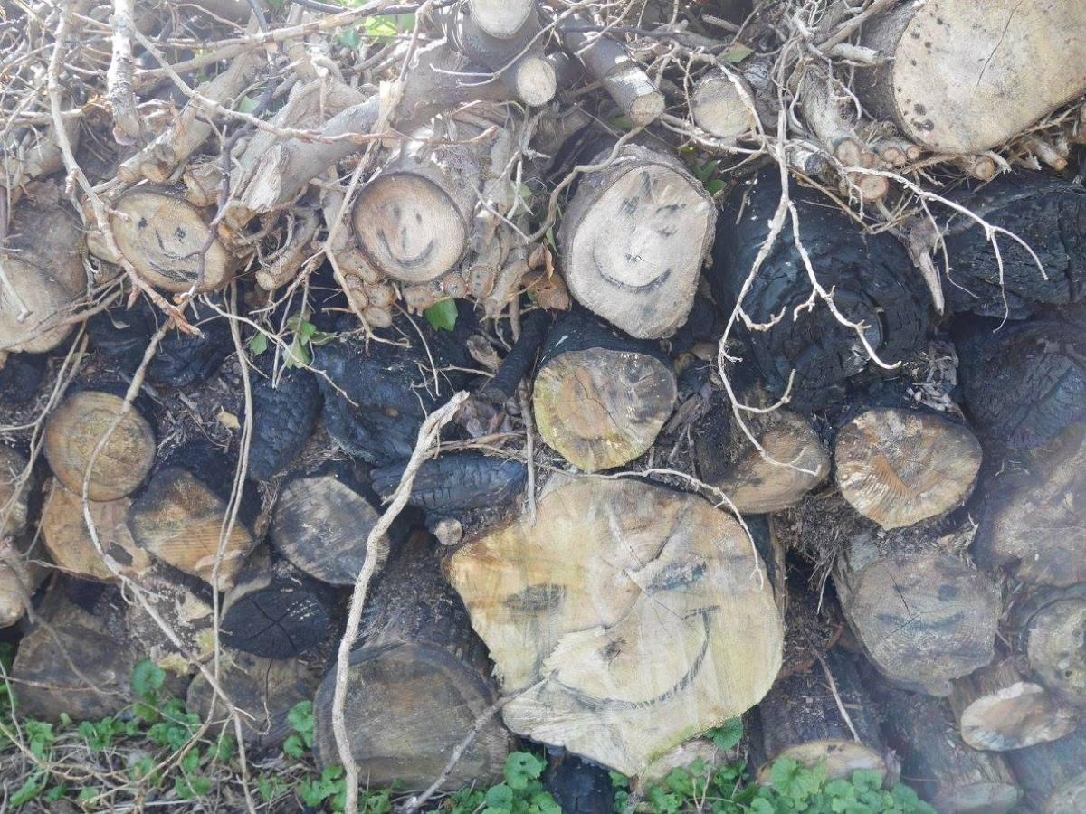 Happy logs