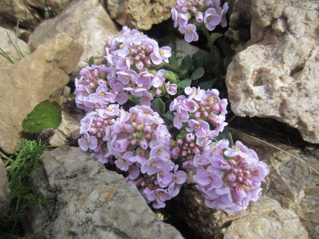 Pretty pink flowers growing out the rocks