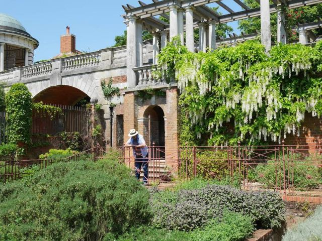 Dad in the pergola garden