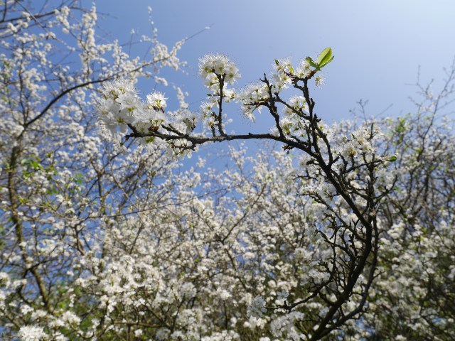 Blossom time of year