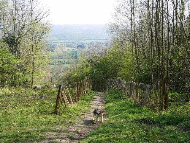 Puppy and view from Trosley Country Park