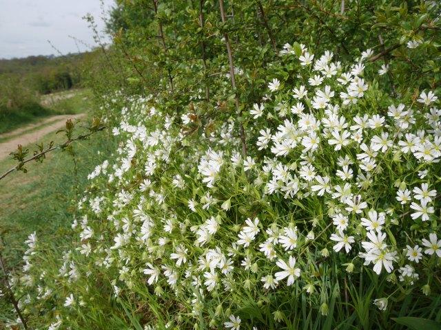 Pretty bushes on the Rascombe farm reserve