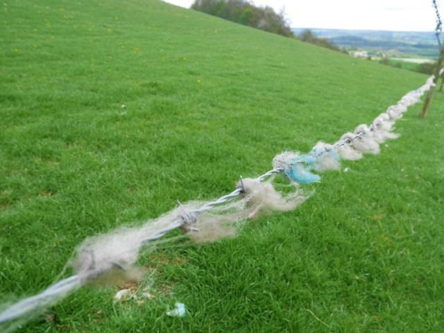 Rubbish sheep barrier - no sheep in sight!