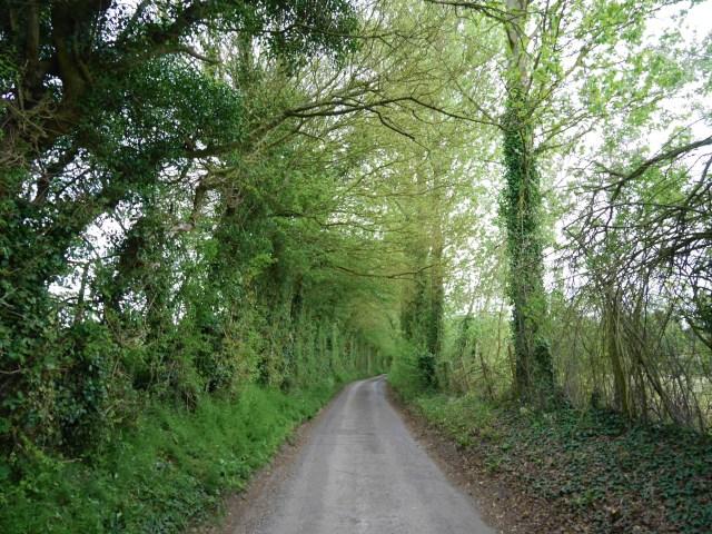 Woods near Wye