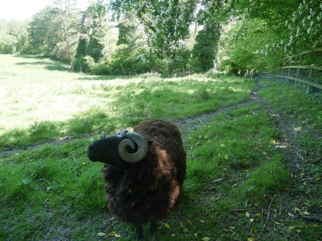 Derek the ram