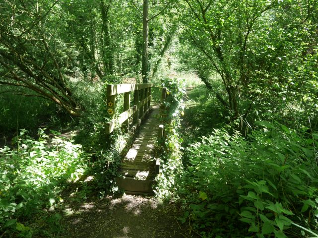 Overgrown bridge