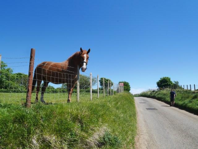 Hello horsey!