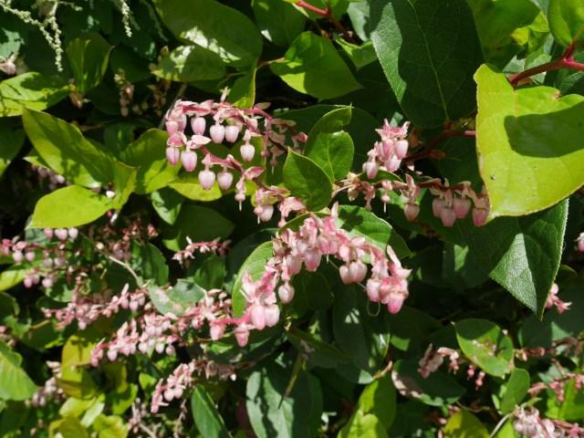 teeny bell flowers