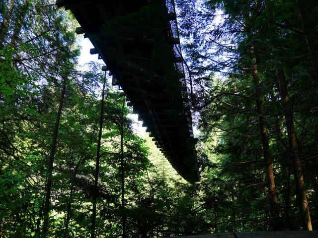 Under the Capilano Suspension bridge