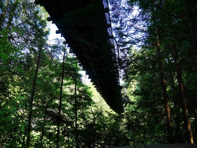 Under the Capilano Suspension bridge