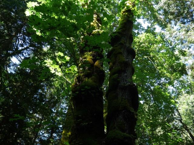 Knobbly trees