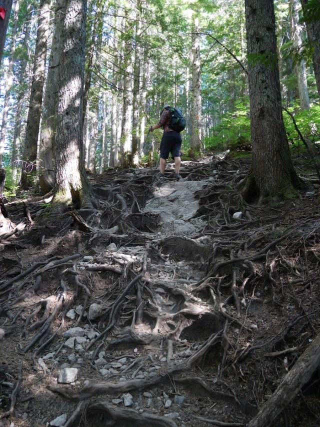 Pretty BCMC trail