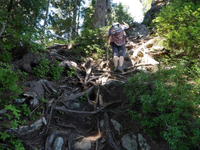 Steep climb through roots