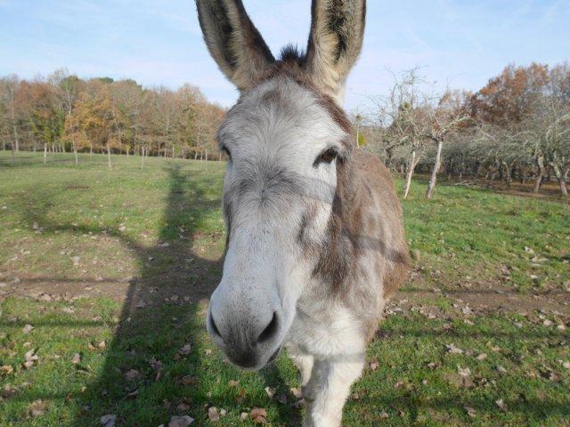 Le donkey