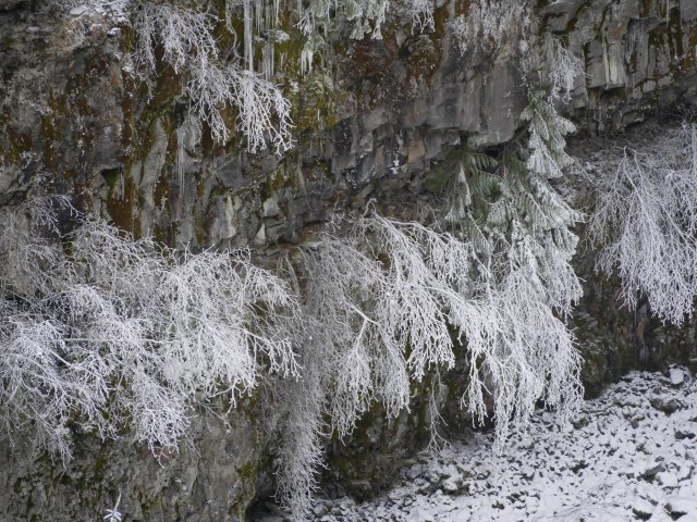 ice-trees by Brandywine Falls