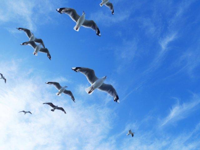 Eep! Seagulls