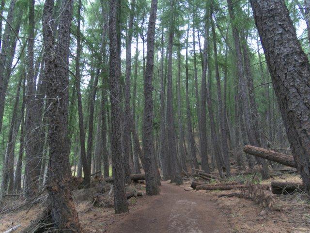 Trees on Mount John Walkway