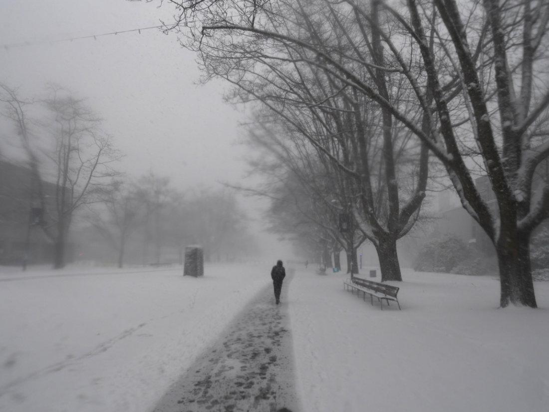 Cat in Canadian snow