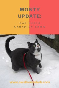 Monty update - cat in snow