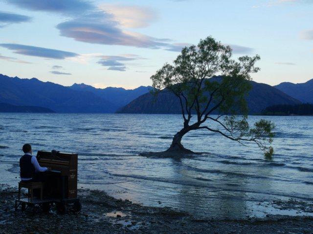 The Lake Wanaka tree at sunset