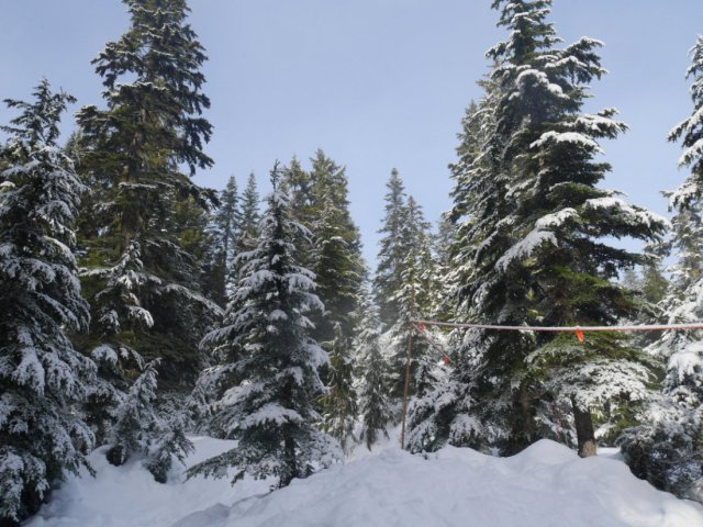 Grouse Mountain snow shoe trail