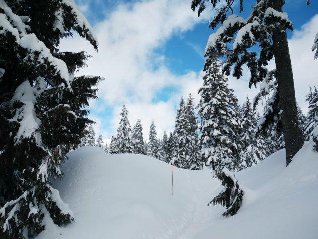 Snowshoe trails on Mount Seymour