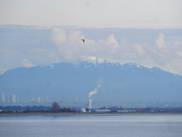 Boundary Bay, looking back to Burnaby