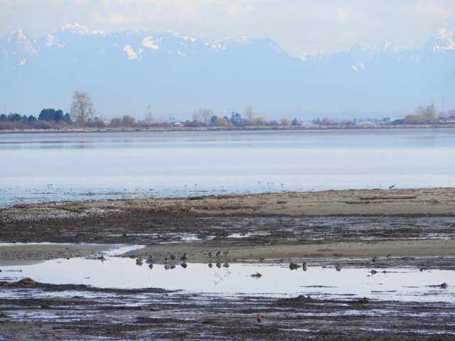 The view from Boundary Bay Regional Park