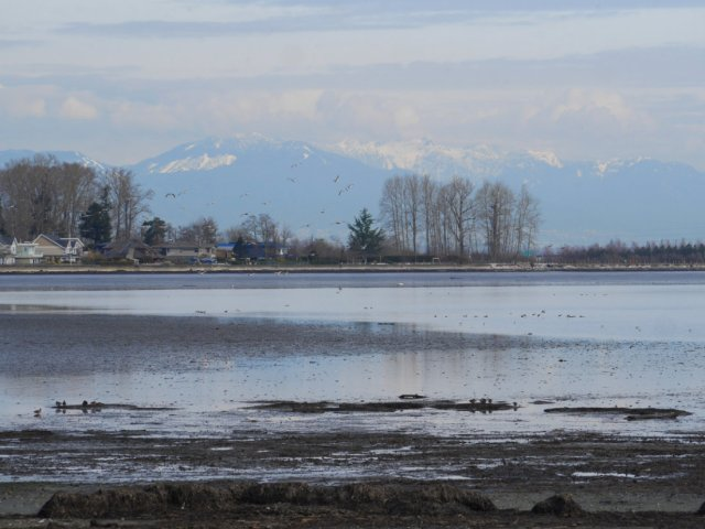 Mountain views from Boundary Bay