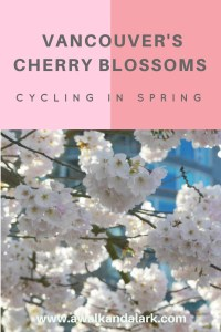 Vancouver's Cherry Blossoms - Cycling in Spring