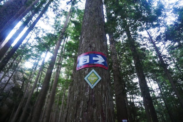 Start of the Sea to Summit trail