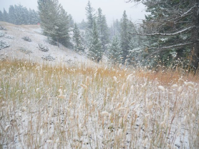 Grass on the Hoodoo trail